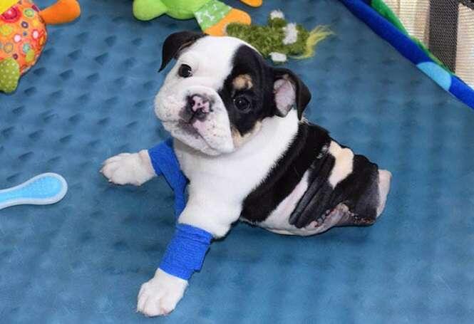 Cão com grave deficiência física mostra superação lutando pela vida