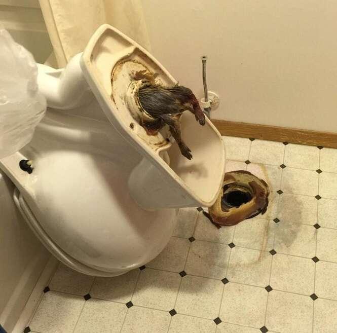 Internauta posta imagem de enorme rato preso dentro de vaso sanitário