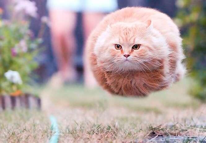 Fotos curiosas de gatos registradas no momento perfeito