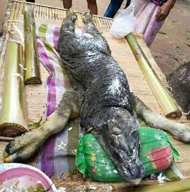 Criatura bizarra com corpo de búfalo e cabeça de crocodilo é encontrada na Tailândia
