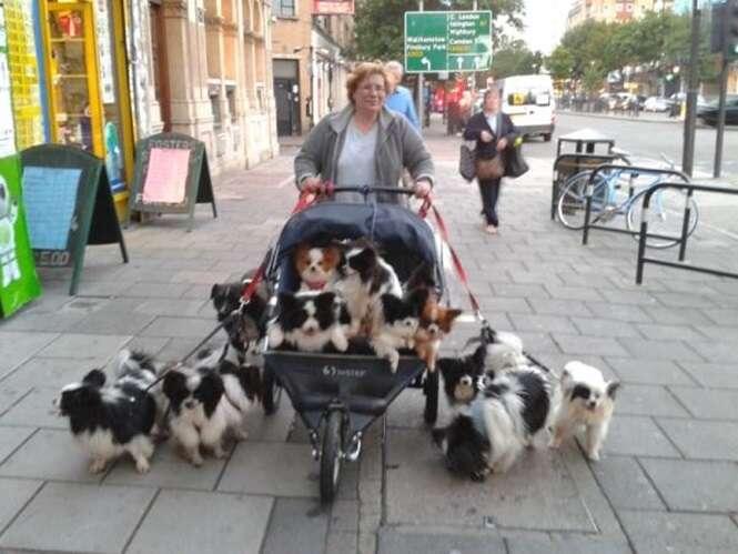 Fotos mostrando como é divertido levar os cães para passear