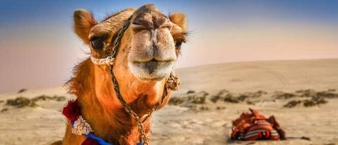 Curiosidades sobre os desertos