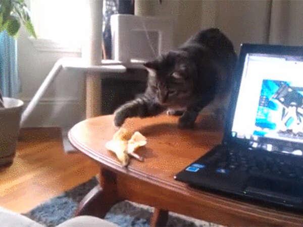 Imagens demonstrando como os gatos sofrem com os alimentos dos humanos