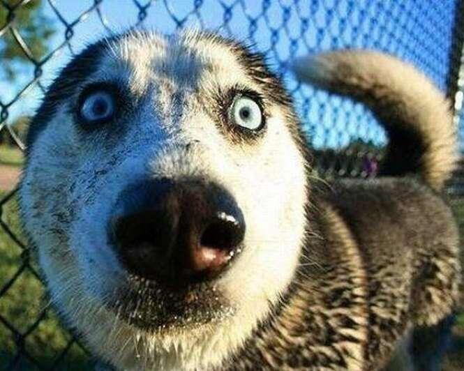 Reações divertidas de animais