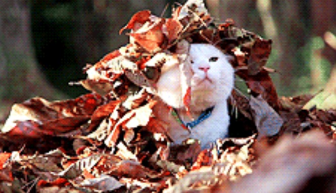 Pessoas e animais se divertindo com pilhas de folhas