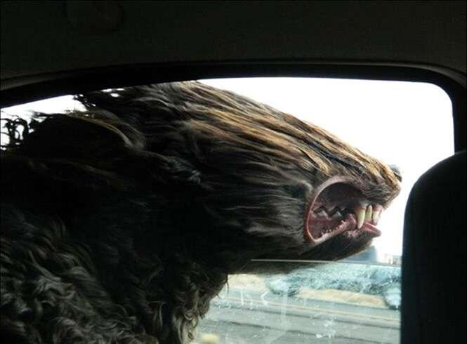 Cães se divertindo durante o passeio de carro