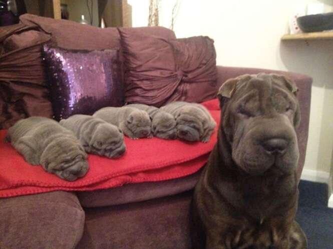 """""""Mamães"""" cães orgulhosas de seus filhotes"""