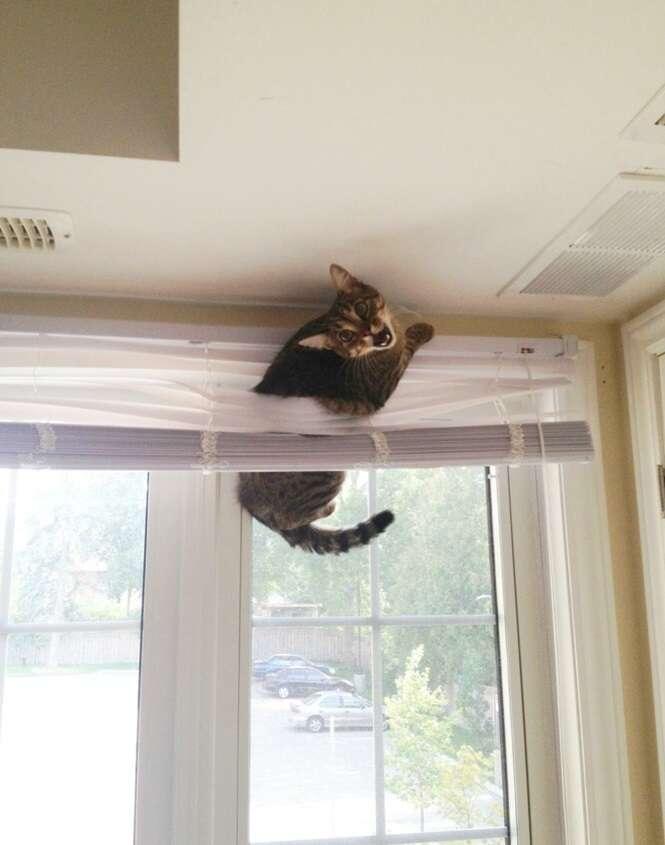 Gatos em situações que eles não gostariam de passar