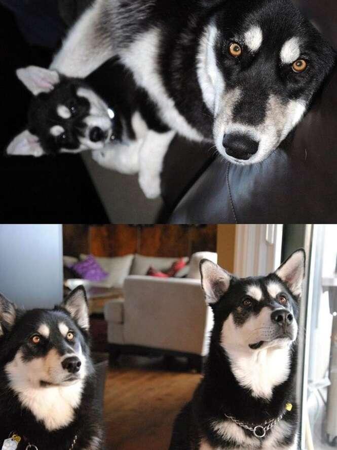 Antes e depois de filhotes de cachorro