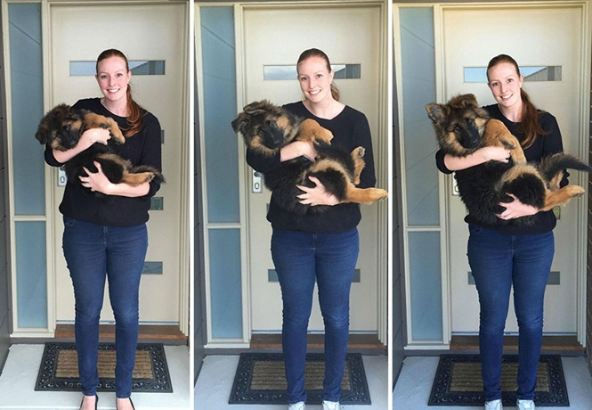 Casal documenta crescimento rápido de seu cão durante 8 meses