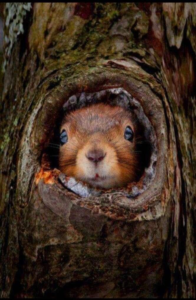 As mais belas fotos envolvendo espécies variadas de animais