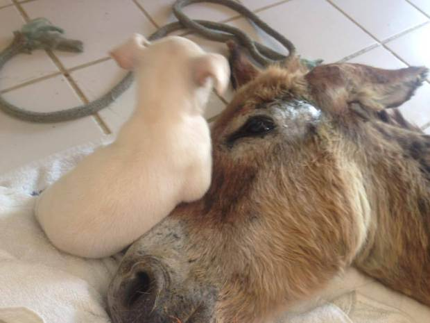 Dog becomes friend with an injured donkey Credit: Facebook/Zenith Gurgel