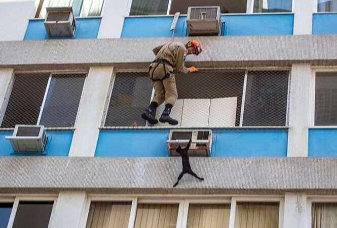 Gato fica pendurado se segurando à espera de resgate no sexto andar de prédio no Rio de Janeiro