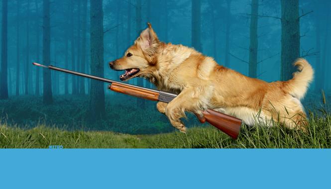 Cão chamado Gatilho dispara arma e acerta seu proprietário
