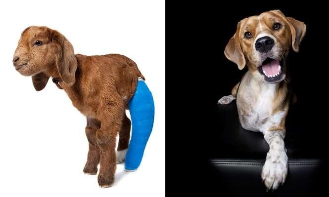Série imagens usa animais com deficiência física como modelos