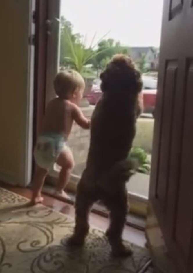 Vídeo de bebê e cão em êxtase ao ver pai da criança chegando em casa se torna viral