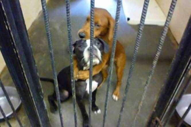 Cães fotografados abraçados quando estavam prestes a serem sacrificados ganham final feliz ao serem adotados