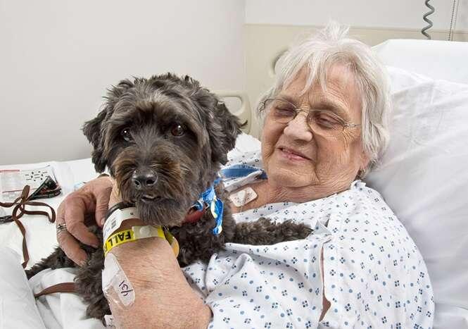 Marido contrabandeia cão dentro de mala para que esposa doente em hospital pudesse dizer adeus ao animal