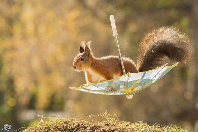 Fotógrafo cria incrível série de fotos de esquilos que habitavam seu jardim