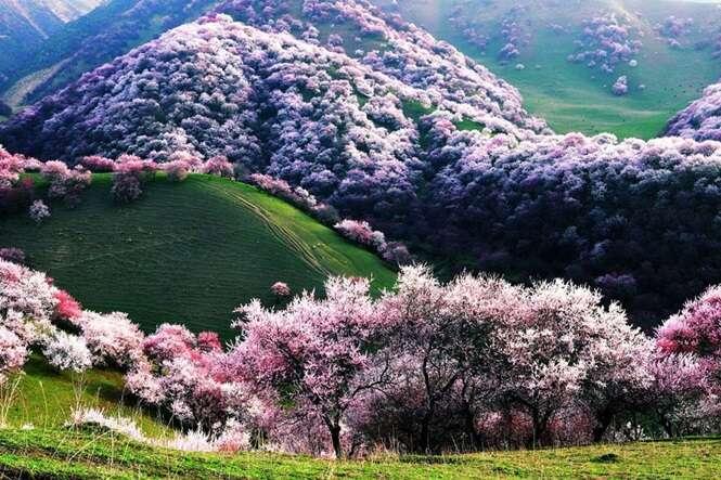 As mais belas florestas do mundo