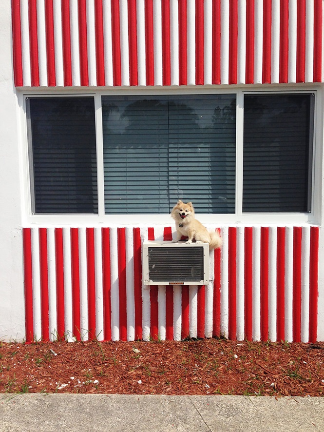 Cãozinho faz sucesso na web ao ser fotografado em sobre diferentes tipos de objetos