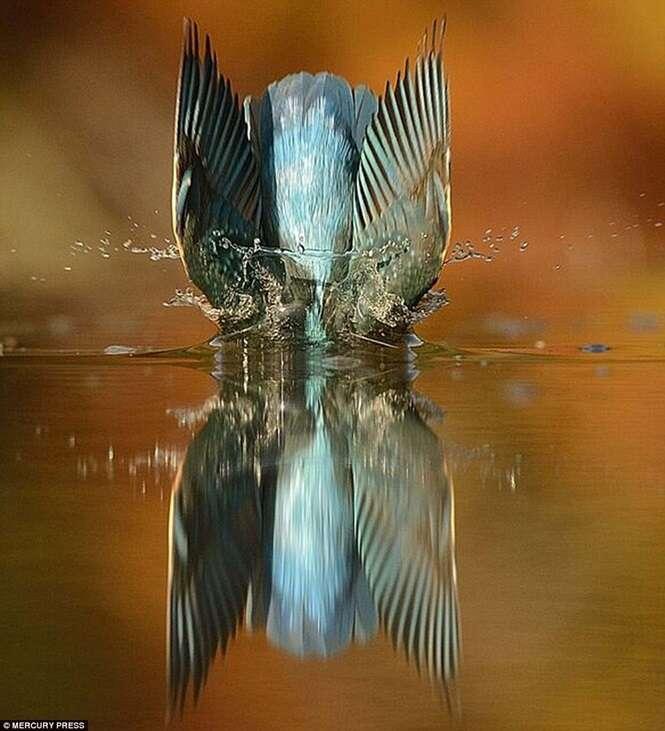カワセミ着水の瞬間