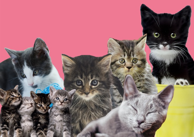 Motivos científicos que comprovam que ter um gato faz bem para a saúde