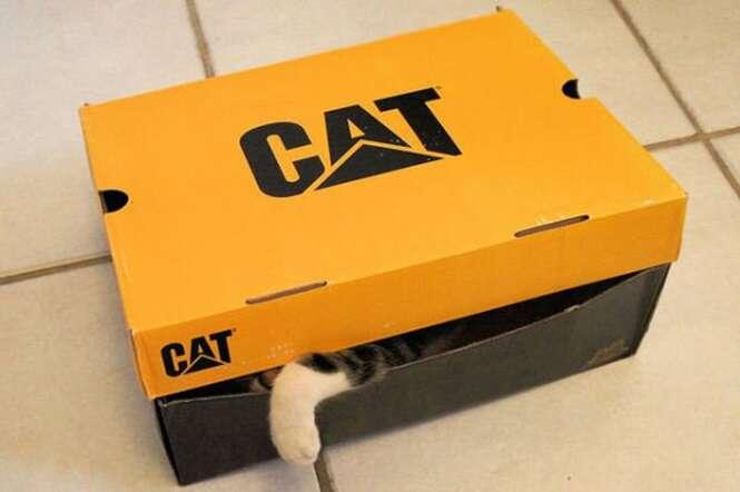 Fotos curiosas de gatos para deixar seu dia mais feliz