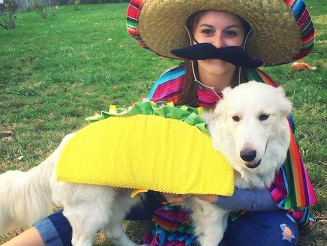 Fotos divertidas envolvendo cachorros