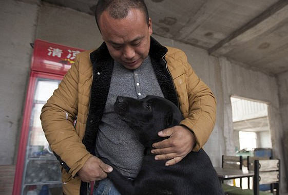 Milionário vai à falência após comprar matadouro para criar abrigo e salvar mais de 2 mil cães