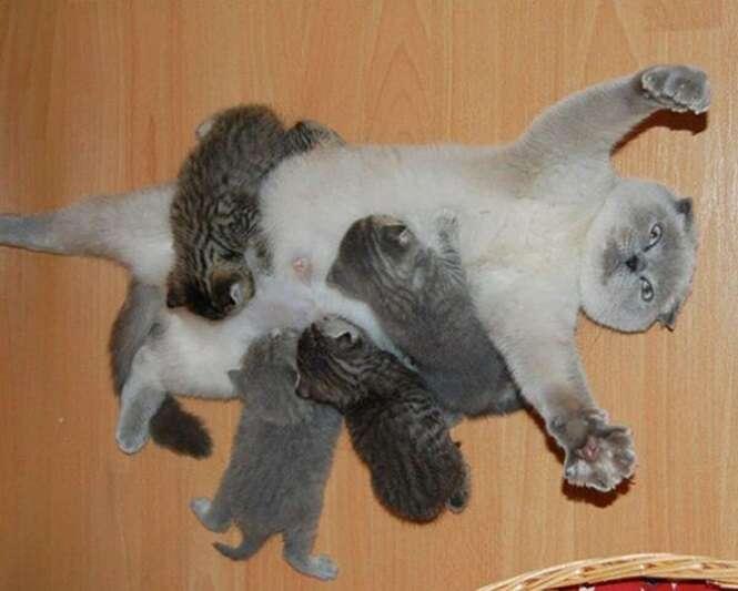 Lindas imagens de gatinhos com seus filhotes