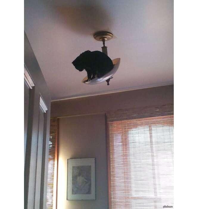 Gatos que pensam que são ninjas