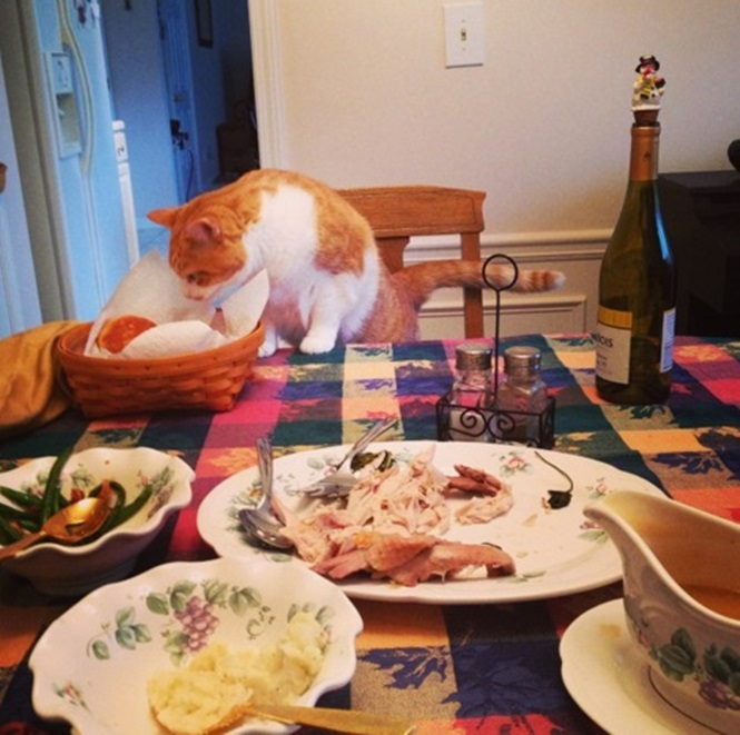 Gatos que adoram estragar o jantar