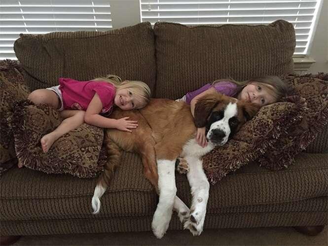 Cãezinhos querendo deixar seu dia mais feliz