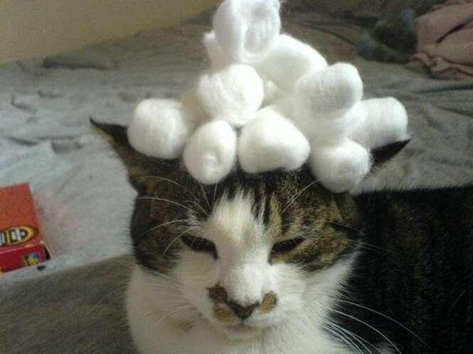 Donos que adoram colocar coisas na cabeça de seus gatos