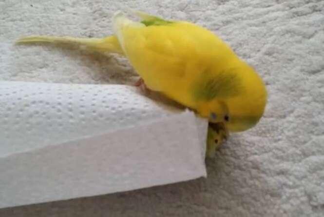Heartbroken bird won't leave the side of friend after it dies