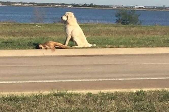 Cão que se recusou sair de perto de companheiro morto consegue encontrar seus donos