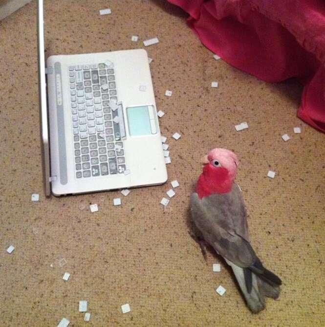 Razões para não confiar em aves