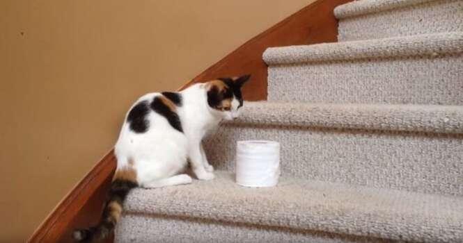 Gato luta para levar rolo de papel higiênico para seu dono em vídeo