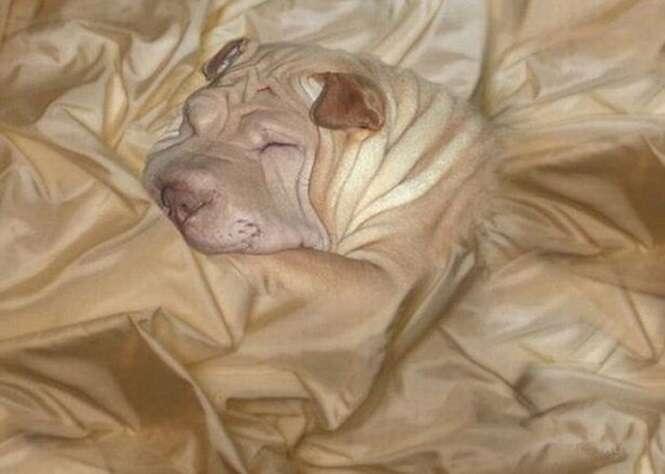 Série de imagens mostra animais que se esconderam de seus donos graças a seus poderes de camuflagem