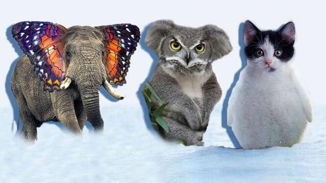 Animais híbridos que você certamente nunca viu