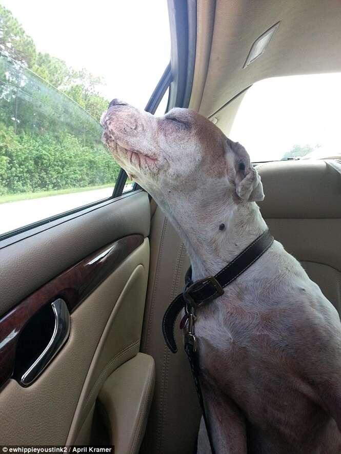 Imagem de cadela idosa tentando colocar cabeça para fora de janela de carro durante seu último passeio antes de morrer comove internautas