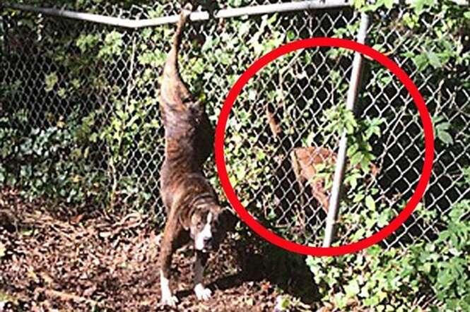 Cão fiel permanece ao lado da namorada por dias depois que ela ficou presa em cerca