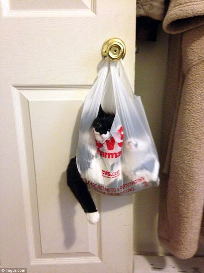 Gatos atrapalhados que se arrependeram do que fizeram