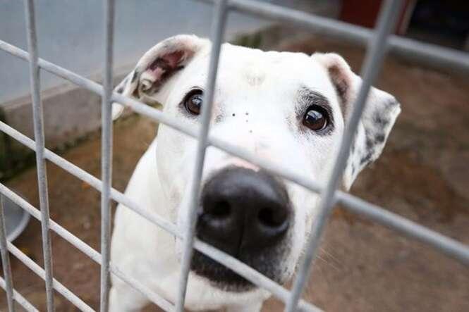 Cão que recebeu 10 mil visitas em canil finalmente foi adotado
