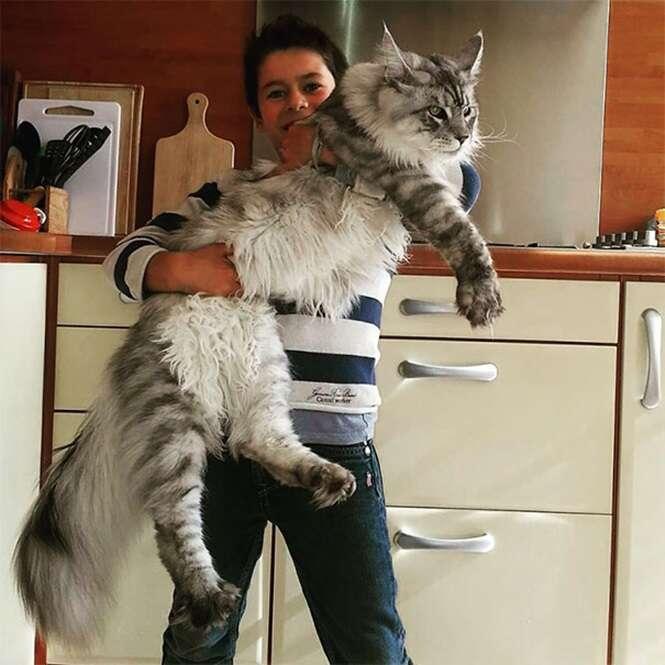 Gatos que vão fazer seu felino se sentir minúsculo