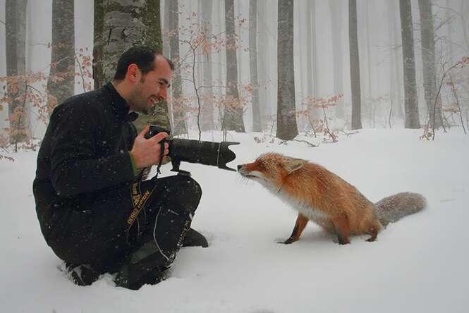 Imagens demonstrando que os fotógrafos da natureza têm o melhor emprego do mundo