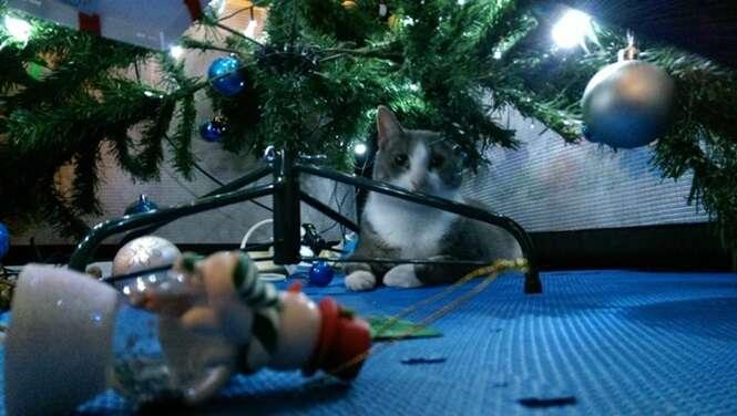 Gatos que adoram as árvores de Natal