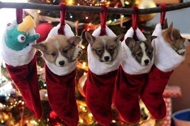 Animais que estão prontos para o Natal