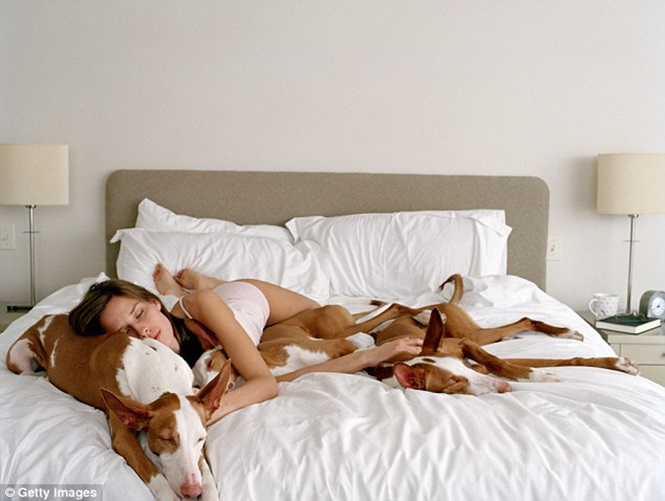 Pessoas que dormem com animais na cama têm sono melhor